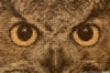 Bill Frymire Owl Eyes Panorama 8 bit.jpg